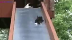 مهر مادری ماده گربه