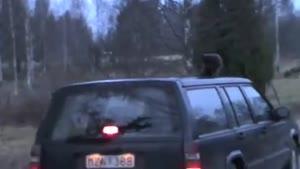گربه و رانندگی