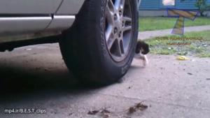 باحال ترین و خنده دارترین گربه ها