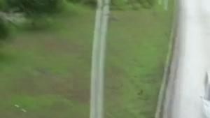 گذر پرنده از بزرگراه