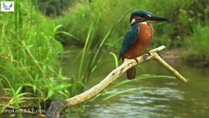 پرندگان بسیار زیبا