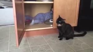گربه و بچه