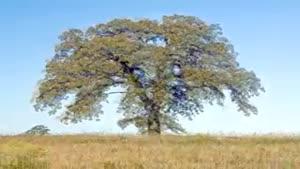 تایم لپس ۱ ساله از یک درخت
