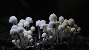 تایم لپس رشد قارچ