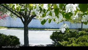 زیبای طبیعت در فصل بهار