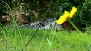 آبشار های بسیار زیبا در طبیعت