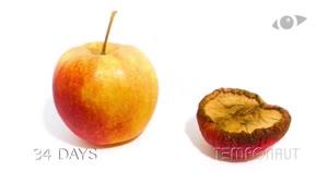 تایم لپس کپک زدن سیب