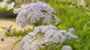 طبیعت گل ها