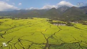 طبیعت گل های زیبا با دی جی آی فانتوم