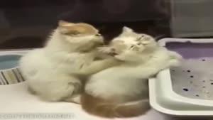 ماساژ گربه ای جالب