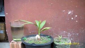 تایم لپس رشد درخت نخل در ۸۱۵ روز