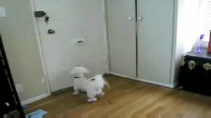 واکنش سگ و گربه ها به نامه پستی
