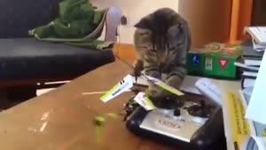 گربه بازیگوش و هلیکوپتر