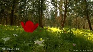 طبیعت دیدنی و موزیک آرام بخش