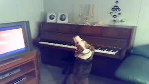 جدیدترین آکادمی موسیقی سگی