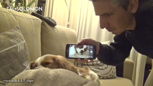 خوروپوف کردن سگ