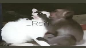 دوستی میمون و گربه
