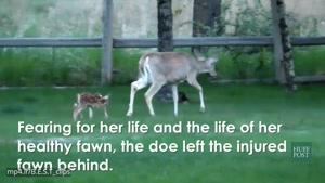 شکارچی بچه آهو را نجات داد