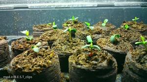 تایم لپس رشد گل رز