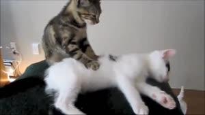 ماساژ گربه ای بامزه خنده دار
