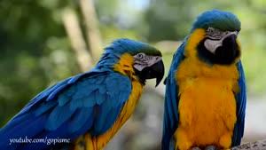 ویدیو HD پرندگان - حیات وحش