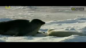 مستند فارسی - طبیعت روسیه - قطب شمال - قسمت 2