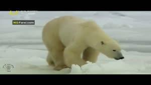 مستند فارسی - طبیعت روسیه - قطب شمال - قسمت 3