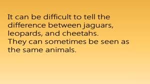 فرق بین جگوار،پلنگ و یوز پلنگ(چیتا)