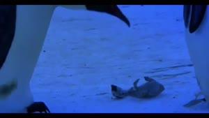 سوگواری پنگوئن ها برای مردن بچشون