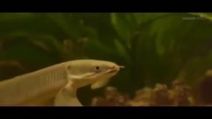 ماهی عجیب بیرون از آب