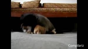 دوربین مخفی حیوانات خوابالو
