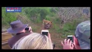 فرار شکار از چنگال شیر