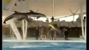 اینجا جزیره کیش است ،پارک دلفین ها