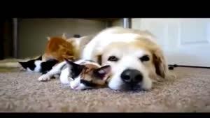 تفاوت های انسان ها و حیوانات