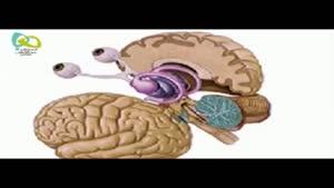 آناتومی مغز
