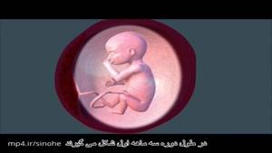 هفته ۱۳ تا ۱۷ بارداری