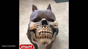 ماسک سگی ترسناک