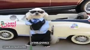 طنز رانندگی سگ