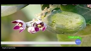 خواص استبرق، گیاهی که تاکنون حتی اسمش را هم نشنیده اید !