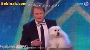 نمایش سگ سخنگو