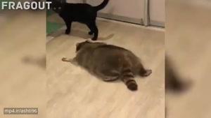 حیوان های بدجنس