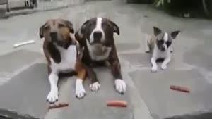 سگ کوچولوی حریص