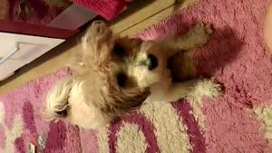 فندوق باهوشترین سگ :)))))