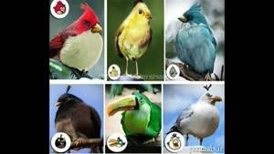 پرنده های انگری بردز تو واقعیت