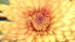 زیباترین گلهای جهان
