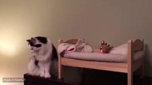 تا حالا گربه ای برای خودش تخت داشته باشه دیدید؟