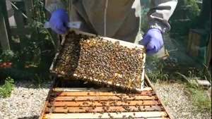 آموزش کامل وجامع پرورش زنبورعسل ۰۲۱۲۸۴۲۳۱۱۸-۰۹۱۳۰۹۱۹۴۴۸-wWw.۱۱۸File.Com
