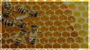 آموزش کامل پرورش زنبور عسل بصورت گام به گام در WWW.۱۱۸FILE.COM