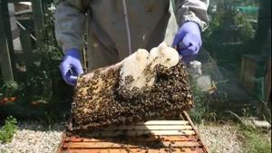 جدیدترین آموزش پرورش زنبورعسل ۰۲۱۲۸۴۲۳۱۱۸-۰۹۱۳۰۹۱۹۴۴۸-wWw.۱۱۸File.Com