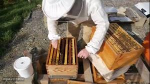 کاملترین آموزش زنبورداری در wWw.۱۱۸File.Com